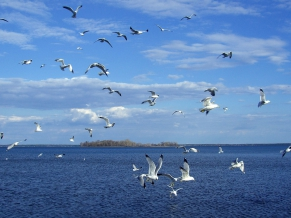 Birds on Sea
