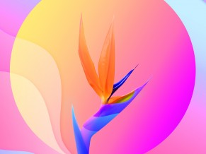 Colorful Abstract Flower 4K