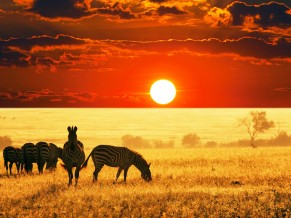 Sunset African Savanna 4K