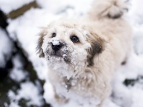 Cute dog in Winter Snow 4K 5K