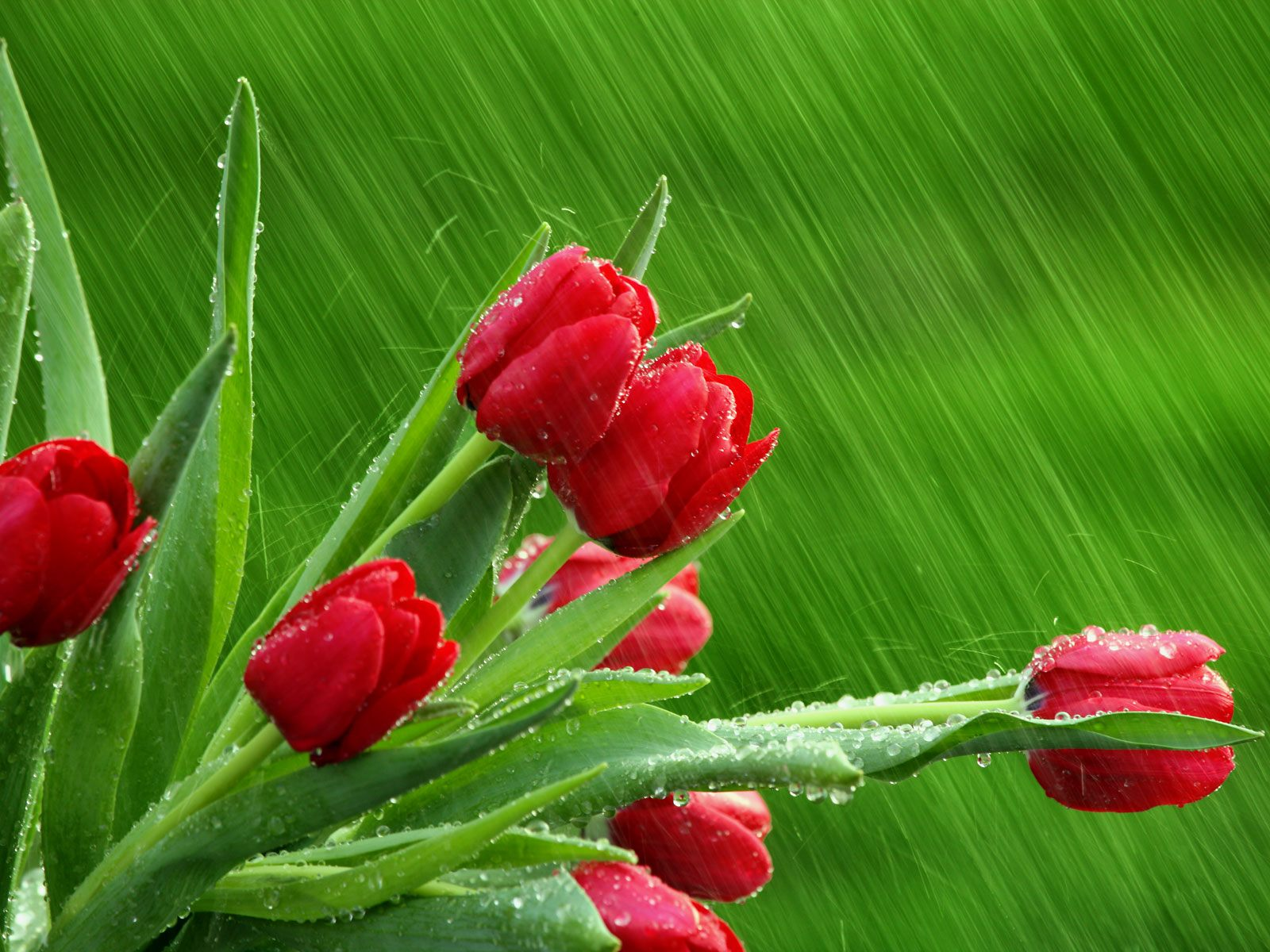 April Showers Facebook Covers Wallpapers Hd
