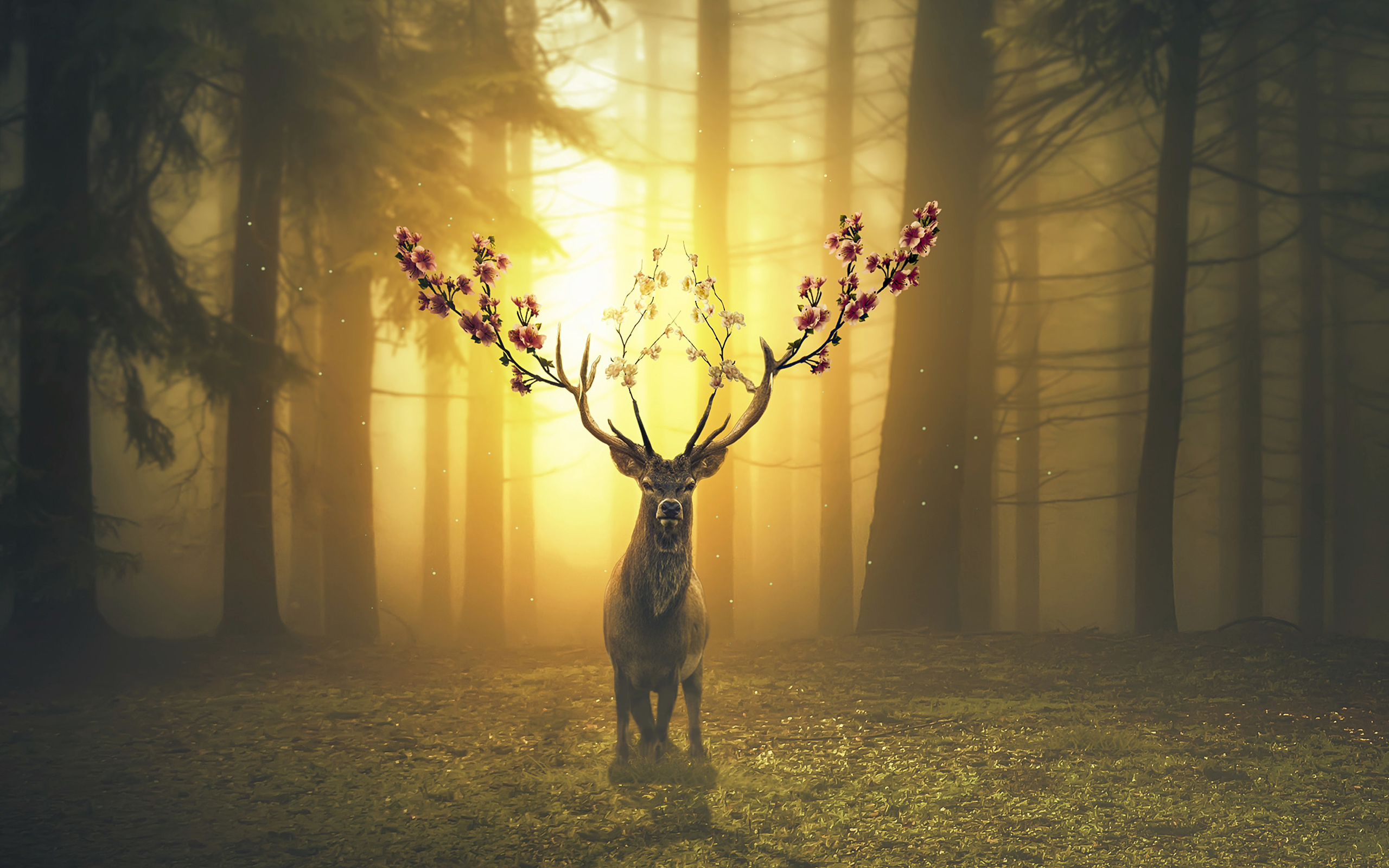 Top Wallpaper Forest Deer - spring_deer_forest-widescreen_wallpapers  Pictures_74415 .jpg