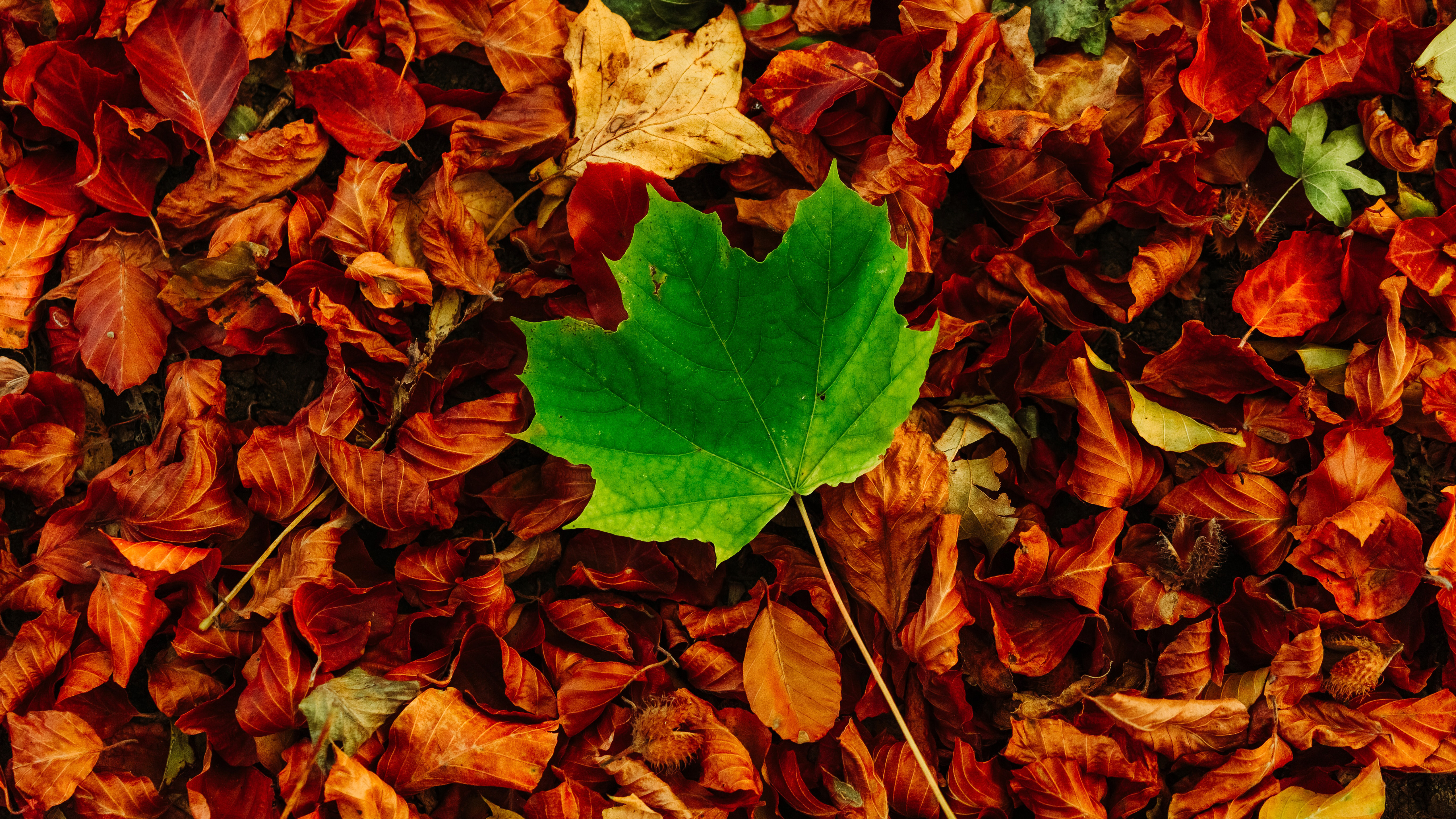 Autumn Leaves 5k Wallpapers Wallpapers Hd