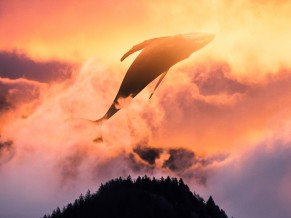 Surreal Sunset Whale 4K