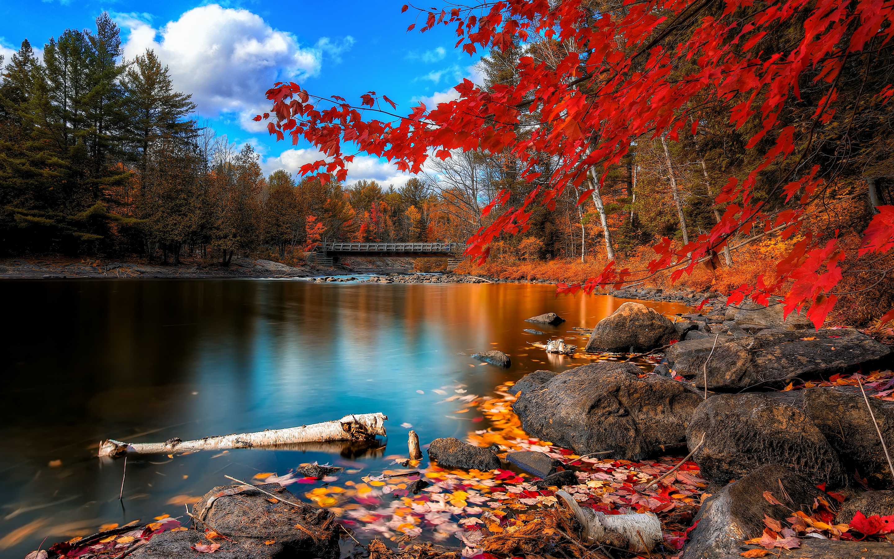 fall foliage wallpapers wallpapers hd